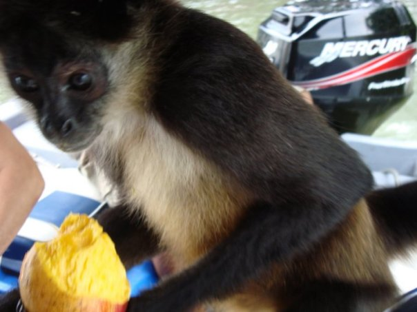 A monkey eating a mango on the boat