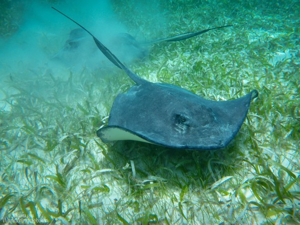 Sting rays up close and personal :-)